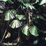 Palms of Subequatorial Queensland - Catalog No. P15