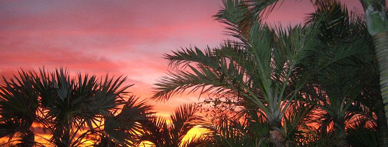 palms-sunset