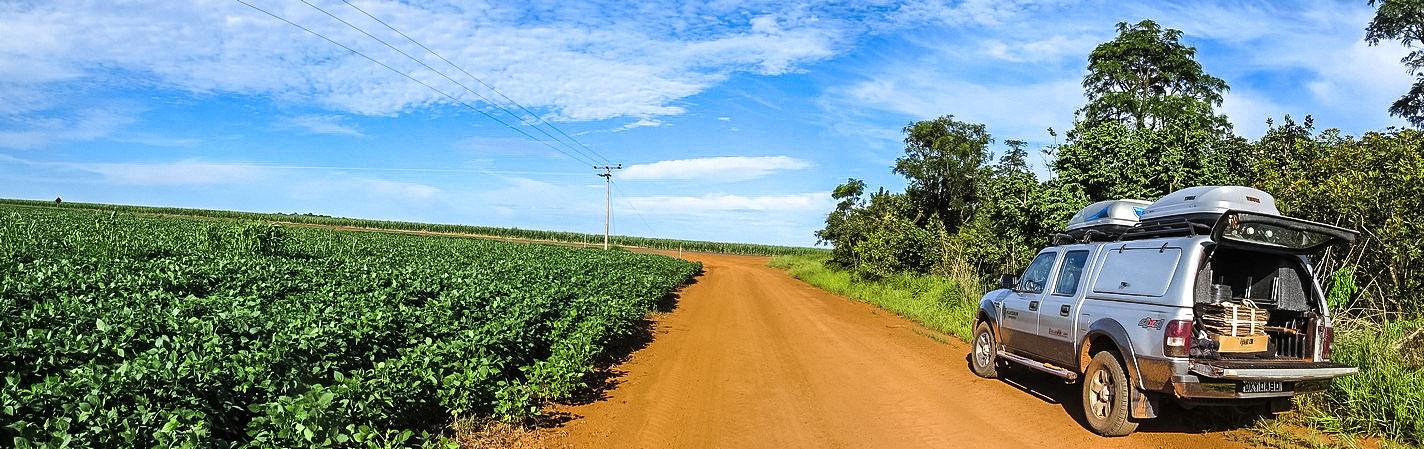 fig-01_soybean_field